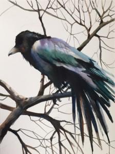 Curiosity Never Killed the Crow